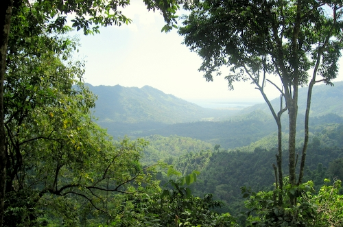 Indonesian coffee plantations are some of the world's largest